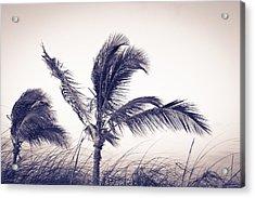 Palms 4 Acrylic Print