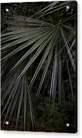 Palms Acrylic Print by Christina Durity