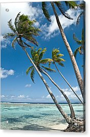 Palms In The Wind Acrylic Print by Jim Chamberlain