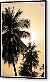 Palms Acrylic Print by Mark Britten