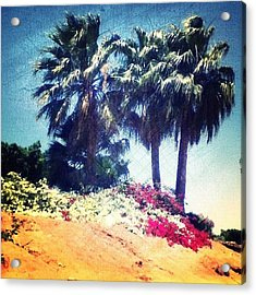 #palms #trees #beach #webstagram Acrylic Print by Andrea Bigiarini