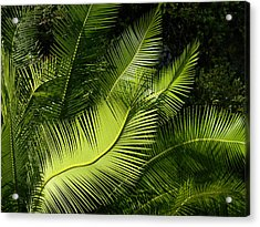 Acrylic Print featuring the photograph Palms Waving At The Sun by Jodi Terracina