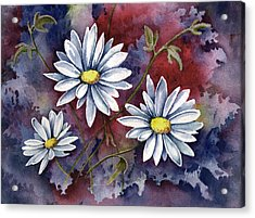 Pampa Daisies Acrylic Print by Sam Sidders