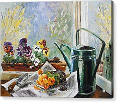 Pansies For My Window Box Acrylic Print by Barbara Pommerenke