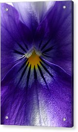 Pansy Abstract Acrylic Print by Lisa Phillips