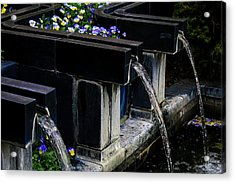 Pansy Fountain Acrylic Print by Toma Caul