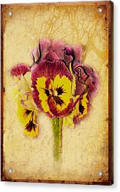 Pansy Acrylic Print by Margaret Hormann Bfa