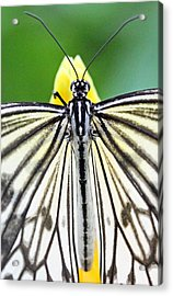 Paper Kite Closeup Acrylic Print by Becky Lodes