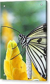 Paper Kite On Yellow Flower Acrylic Print by Becky Lodes