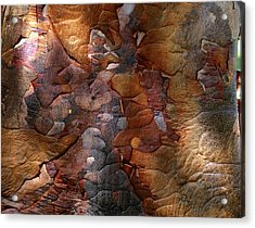 Paperbark Maple Acrylic Print by Vaughan Fleming
