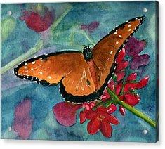 Papilio Fandango  Acrylic Print