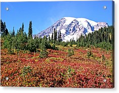 Paradise In Fall On Mt. Rainier  Acrylic Print