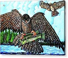 Paragon Falcon Acrylic Print by Bob Crawford