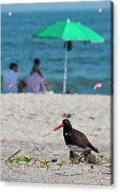 Parenting On A Beach Acrylic Print
