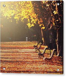 Park Benches In Fall Acrylic Print by Julia Davila-Lampe