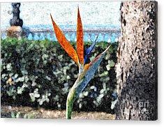 Park Flower Acrylic Print by Slavi Begov
