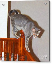 Parkour Cat Acrylic Print by Donna Munro