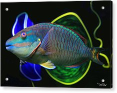 Parrot Fish With Glass Art Acrylic Print by David Salter