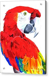 Parrot Acrylic Print by Helen Esdaile