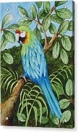 Parrot Acrylic Print by Katherine Young-Beck