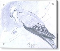 Parrot Acrylic Print by Poornima M