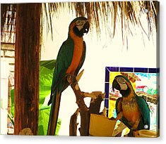 Acrylic Print featuring the photograph Parrots Of Penasco by Rand Swift