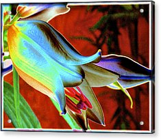 Party Lily Closd Acrylic Print