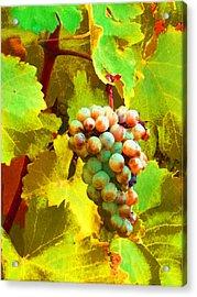 Paschke Grapes Acrylic Print by Kathy Corday