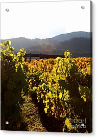 Passage Through The Old Vineyard Acrylic Print by Wingsdomain Art and Photography