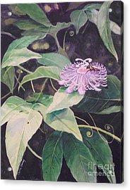 Passion Flower Acrylic Print by Carla Dabney