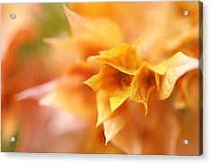 Passion For Flowers. Orange Delight Acrylic Print by Jenny Rainbow