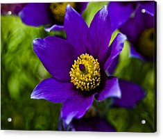 Passion For Purple Acrylic Print