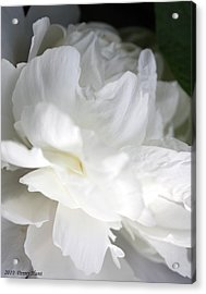 Acrylic Print featuring the photograph Passionate About Peonies by Penny Hunt