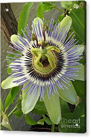 Acrylic Print featuring the photograph Passionate by Tina Marie