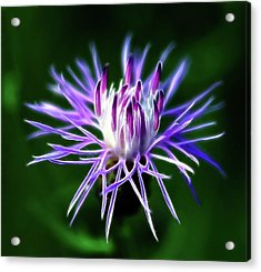 Passionately Purple Acrylic Print by Bill Morgenstern