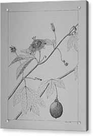 Acrylic Print featuring the drawing Passionflower Vine by Daniel Reed