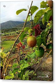 Passionfruit On The Vine With A View Of The Valley   Maui Acrylic Print by J R Stern
