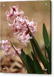 Acrylic Print featuring the photograph Pastel Flowers by Coby Cooper