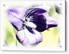 Pastel Iris Acrylic Print by Susan Leggett