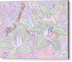 Pastel Lillies Acrylic Print