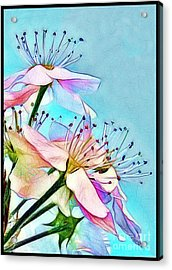 Pastel Petals Acrylic Print by Judi Bagwell