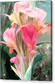 Pastel Pink Cannas Acrylic Print by Elaine Plesser