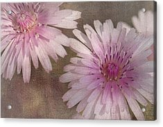 Pastel Pink Passion Acrylic Print by Benanne Stiens