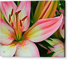 Acrylic Print featuring the photograph Pastel Pretty by Lynne Jenkins