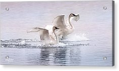 Pastel Swans Acrylic Print