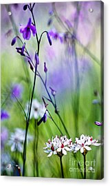 Pastel Wildflowers Acrylic Print by David Lade