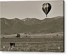 Acrylic Print featuring the photograph Pastoral Surprise by Eric Tressler