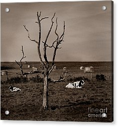 Pastorale 2 Acrylic Print by Mark Fuller