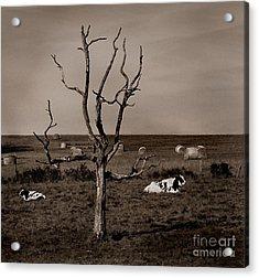 Pastorale 2 Acrylic Print