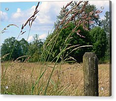 Acrylic Print featuring the photograph Pasture Grass by Pamela Patch